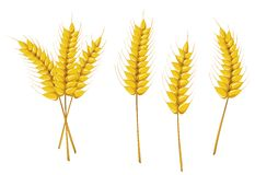 Symboles d'agriculture Photo stock