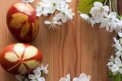 Symboles de ressort - oeufs de pâques teints avec des peaux et des fleurs de cerisier d'oignon sur un fond en bois avec l'espace  Photos stock