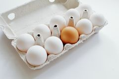 Group of white eggs and among them brown in carton on white background. Minimal style. Symbolic concept - stand out from crowd royalty free stock image