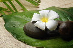 The symbolic by flower for natural spa healthy Royalty Free Stock Image