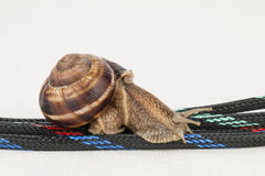 Symbolic photo for slow connection. Stock Photo