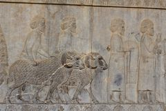 Symbolic relief on a wall of the ancient city of Persepolis Stock Photography