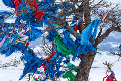 Ribbons on the tree Royalty Free Stock Images