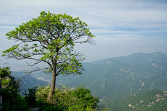 The Symbolic Tree of Jiawutai Stock Photo