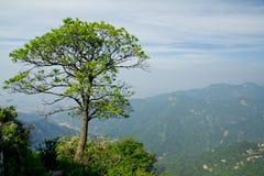 The Symbolic Tree of Jiawutai. Jiawutaiis a famous  scenic spot in QINLING mountains Stock Photo