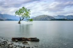 A story of beauty and survival at Wanaka lake. A symbolic willow tree off the shore of lake Wanaka in New Zealand that captured the imagination of numerous Stock Image