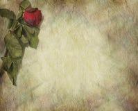 Symbolic withered grunge rose border Royalty Free Stock Images