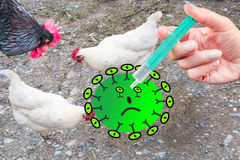 Symbolically general prevention against infections. On the hand hand with syringe and chickens. Concept of avian flu, animal experiments, antibiotics and Stock Photo