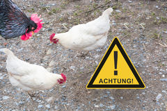 Symbolically general prevention against infections. On the picture warning sign with inscription in english danger and chickens. Concept of avian flu, animal Stock Photos