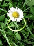 Symbolische ring Royalty-vrije Stock Foto's