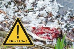 Symboliskt allmänt förhindrande mot fågelinfluensavirus Arkivbilder