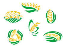 Symbols of cereal plants Stock Photos