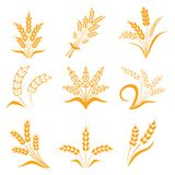 Symbols. for logo design Wheat. Agriculture, corn, barley, stalks, organic plants, bread, food, natural harvest,  illustrati Royalty Free Stock Images