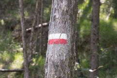 Symbols and signs in the forest paths Stock Photo