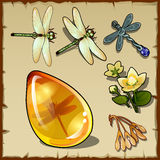 Symbols of summer, plants, dragonflies and amber Stock Photo