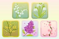 Symbolsblommauppsättning med lilan, liljan, snödroppe, Sakura och mimosan Royaltyfri Bild