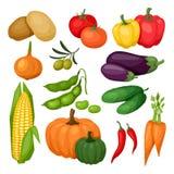 Symbolsuppsättning av nya mogna stiliserade grönsaker Royaltyfria Bilder