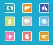 Symbolsuppsättning för mänskligt organ Moderna plana designanatomisymboler Royaltyfri Bild