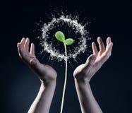 Symbool van de lente en ecologieconcept Royalty-vrije Stock Afbeelding