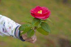 Symbool van vriendschap en liefde Royalty-vrije Stock Foto's