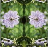 Symetric blomma Royaltyfri Fotografi