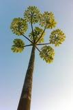Symetryczny drzewo Zdjęcia Royalty Free