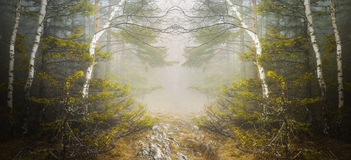 Symetryczny las i tajemnicza mgła obrazy royalty free