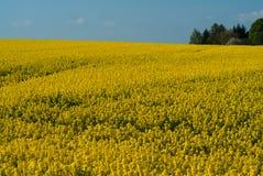 Symfonia w kolorze żółtym Obraz Stock