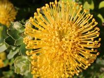Symmentry av en exotisk gul blomma Arkivbild