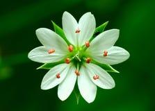 Symmetri Royaltyfria Bilder