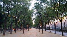 Symmetri i de stads- trädgårdarna arkivbilder
