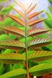 Symmetric Leaves Stock Photo
