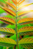 Symmetric Leaves Royalty Free Stock Photography