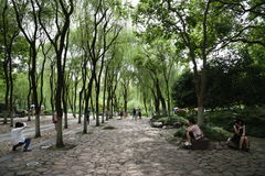 Symmetric park by Westlake Xihu. Symmetric park with straight and round trees to contrast each other. A few people relaxing, taking a stroll in the park Royalty Free Stock Image