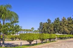Symmetric zieleni rżnięci drzewa w sześcianie tworzą Krajobrazowy projekt w Plażowym parku antalya indyk Obraz Stock