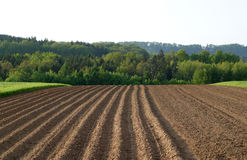 Symmetrical. Field in May stock photos