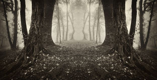 Symmetrical dark forest with fog on halloween Royalty Free Stock Photos