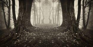 Symmetrical dark forest with fog on halloween. Evening royalty free stock photos