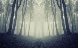 Symmetrical dark forest with fog Stock Images