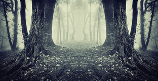Symmetrical dark photo of a spooky forest with fog Stock Images