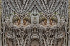 Symmetrical figure of tree bark background Royalty Free Stock Photography