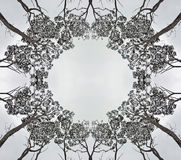 Symmetrical forest canopy silhouette. Circular symmetric pattern of the canopy of tall gumtrees Eucalyptus contrasted against a light grey cloudy sky. Copy space Royalty Free Stock Photo