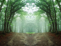 Symmetrical forest with green trees and road Stock Image