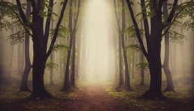 Symmetrical forest and mysterious fog Stock Images