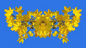 Symmetrical image made of the photo of yellow maple leaves Royalty Free Stock Photos