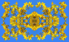 Symmetrical image made of the photo of yellow maple leaves Royalty Free Stock Photo