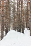Symmetrical line of trees Royalty Free Stock Image