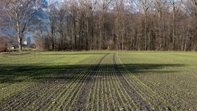A symmetrical meadow in Switzerland. The plants make symmetrical lines leading up to the forest Royalty Free Stock Photo