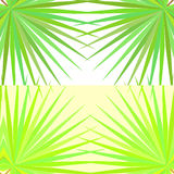 Symmetrical pattern with palm leaves on white background. Stock Images