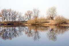 Symmetrical reflection of trees in the water in early spring Royalty Free Stock Image